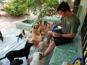 Brendon in Thailand with Dogs