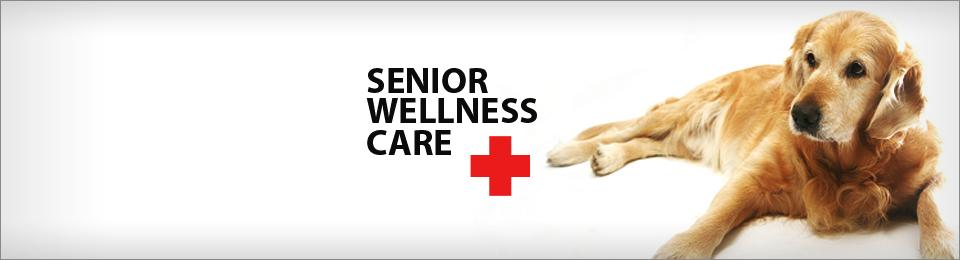 senior wellness care
