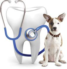 Image result for Dog Dental Care