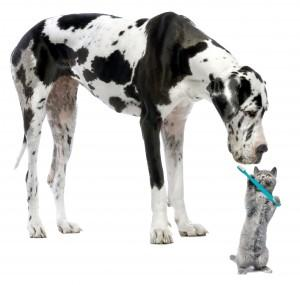 dog-dental3