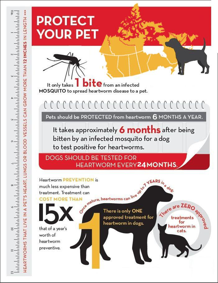 It S Heartworm Season Is Your Pet Protected Town And
