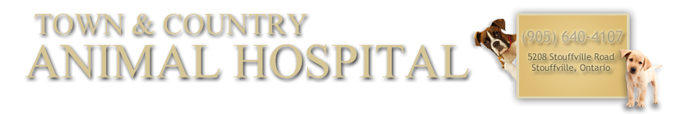 Logo for Town and Country Animal Hospital in Stouffville, ON