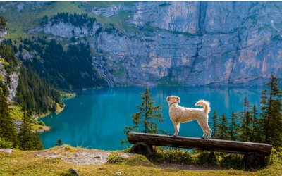 image for Summer Vacation with Your Dog