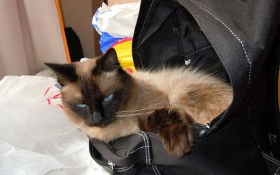 image for Handbag and Coat Pocket Hazards